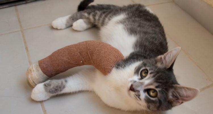kitten-rescue-sh-4